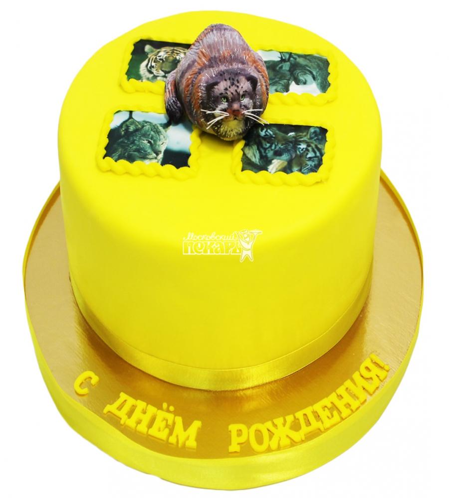 №3054 Торт с кошкой